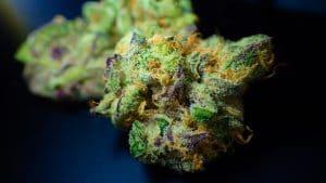 50 Mesmerizing Marijuana Facts You Need to Know