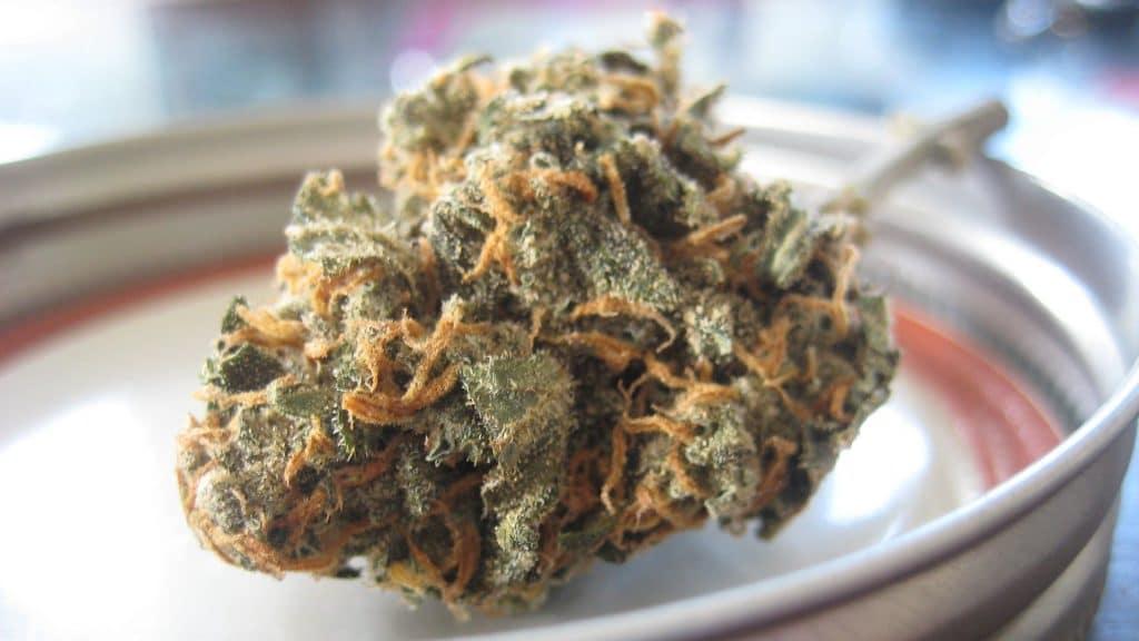 CBD Oil for Anxiety - Marijuana