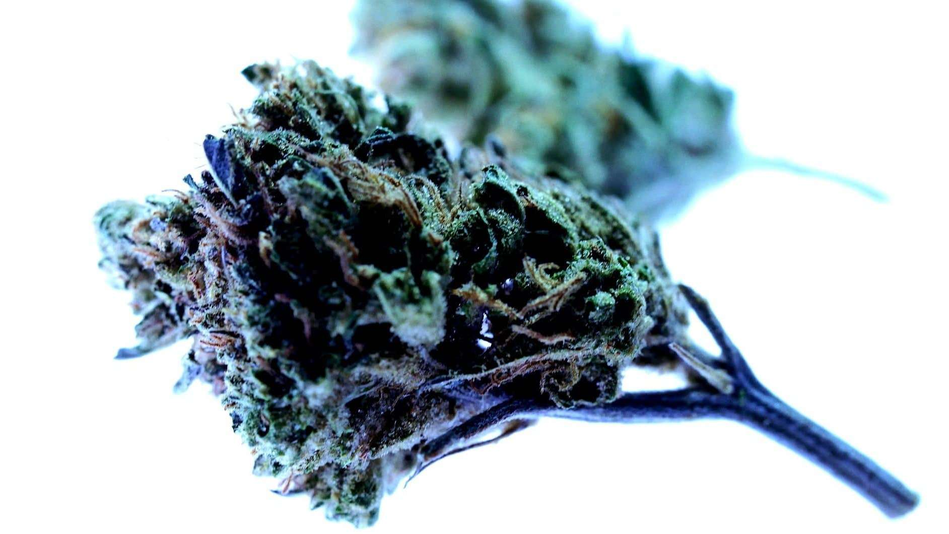 Weed Strains - Featured Image