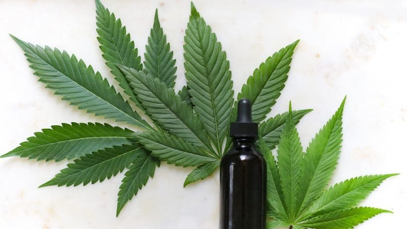 Legalization News - K-12