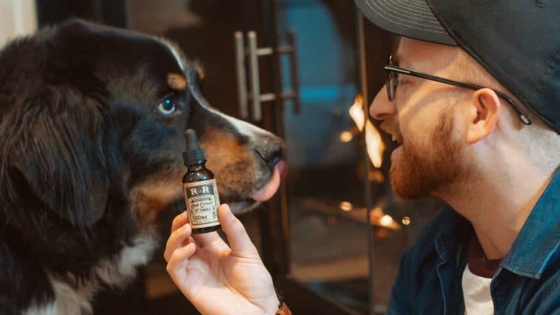 Health News - CBD OIl for Dogs Arthritis