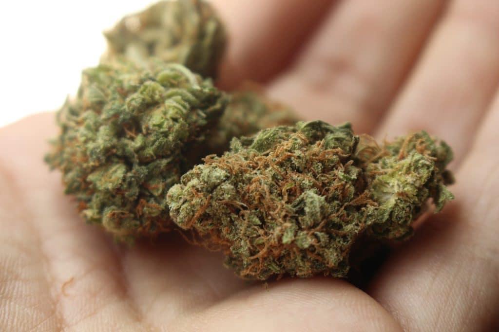 Hemp vs Marijuana - Marijuana Products