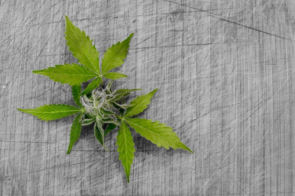 What Are Cannabinoids - FAQs