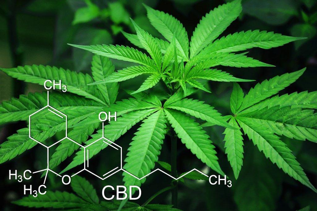 What Are Cannabinoids - CBD