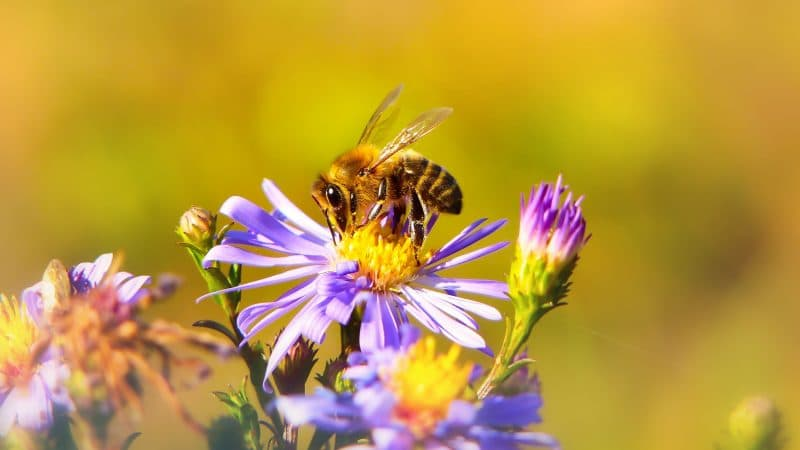 Industry News - Bees