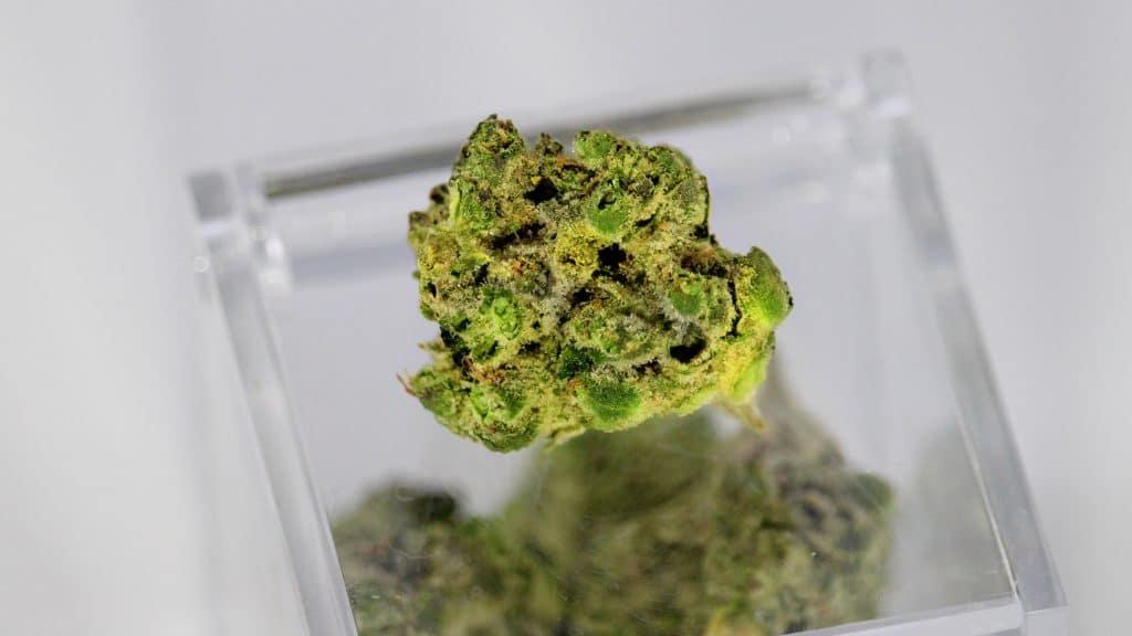 Marijuana and Immune System - Cannabinoids and Marijuana