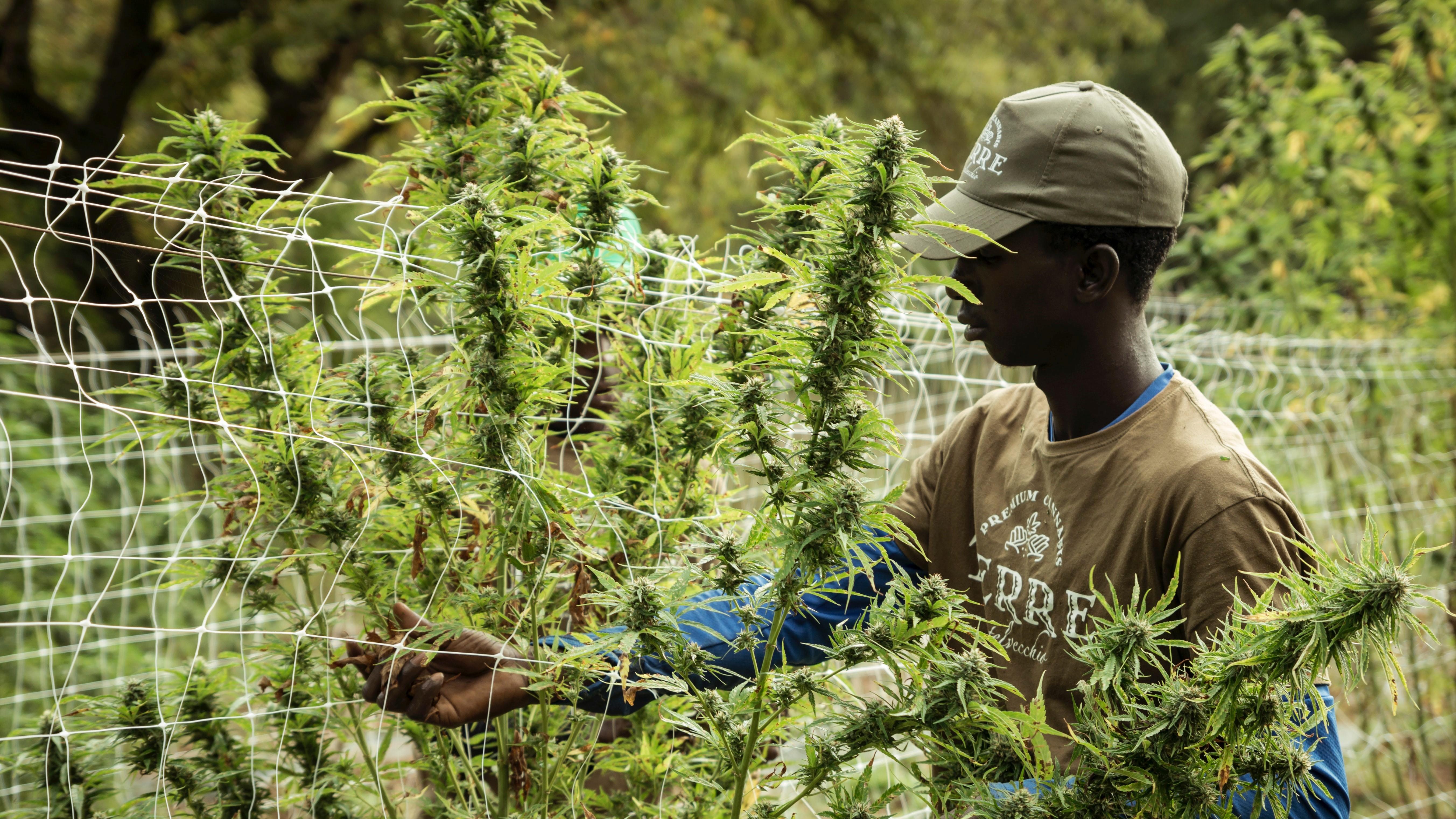Industry News - Cannabis Jobs in High Demand