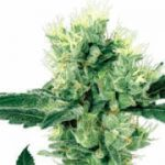 Growers Choice Seeds Coupons & Deals