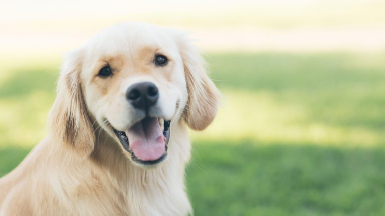 Best CBD Oil for Dogs - Featured Image