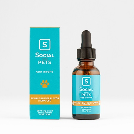 Best CBD Oil for Cats - Social CBD