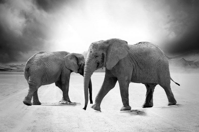 Health News - Elephants