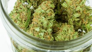 Medical Cannabis Hits the Shelves in Missouri by November