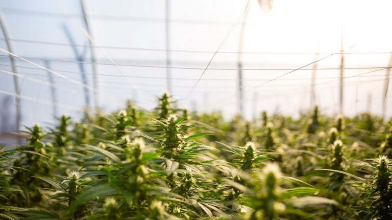 Industry News - USDA Hemp Survey