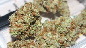 Utah's New Medical Cannabis Program is Booming