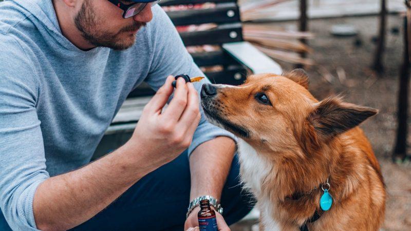 Bestes CBD Öl für Hunde