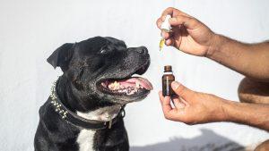 Bestes CBD Öl für Hunde 2020 — Kaufberatung & Test