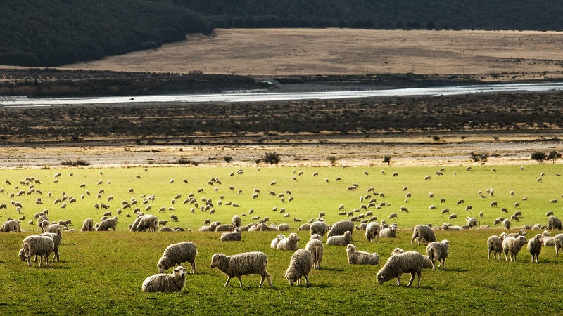 Politics News - New Zealanders Vote 'No'