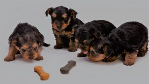 7 Best CBD Dog Treats to Keep Your Doggo Happy and Calm