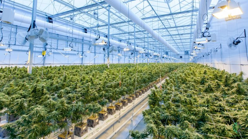 Health News - Indoor-Grown Cannabis Boosting Greenhouse Gas Emission