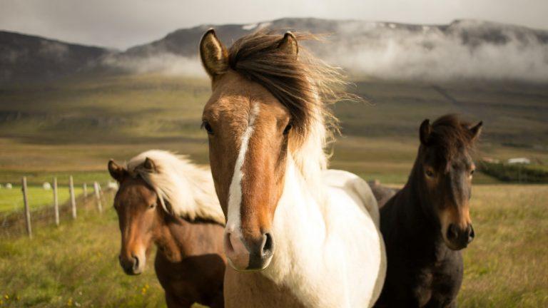 Best CBD Oil for Horses