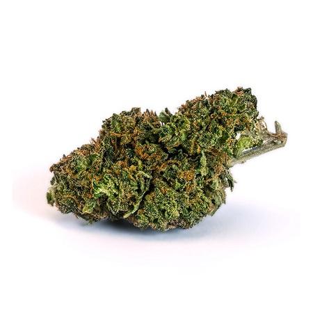 Besten CBD Blüten - Grüne Knolle im Test