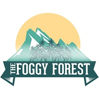 Foggy Forest Review