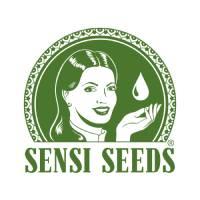 Sensi Seeds CBD im Test
