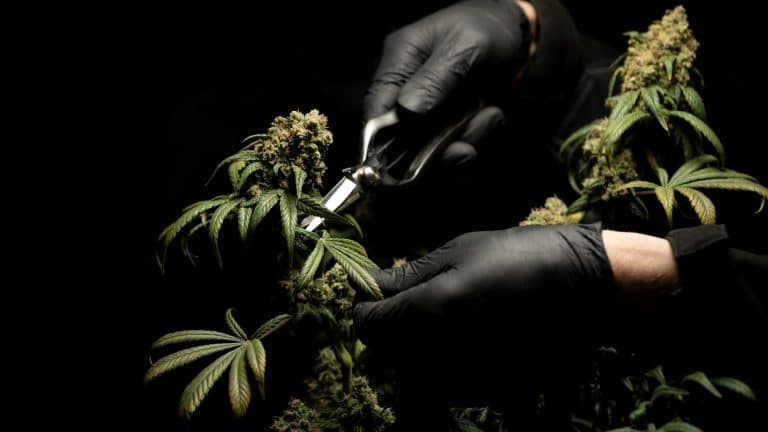 Politics News - Colorado Aims to Tighten Cannabis Laws in 2021
